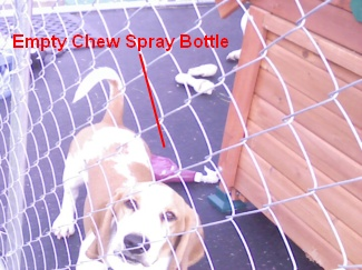 chew spray bottle